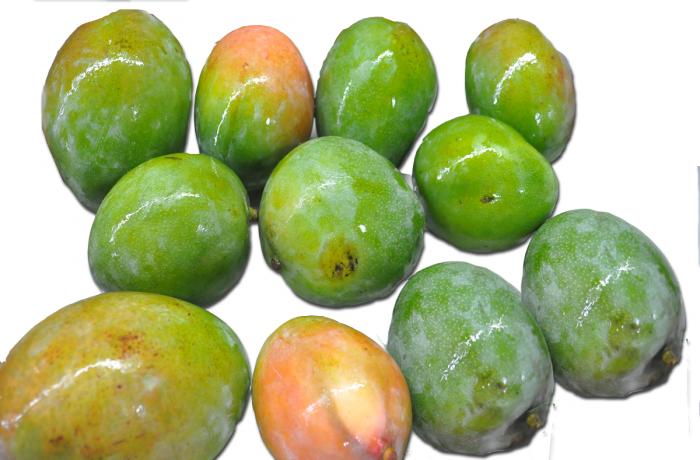 Mangos verdes Kent