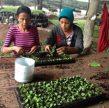 Agroindustrias democratizan la economía de la nación