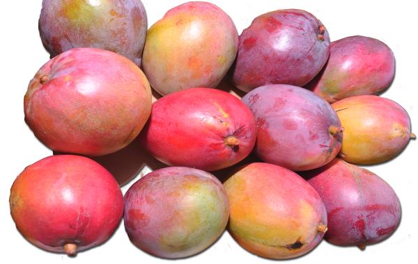 Mangos Maduros Kent