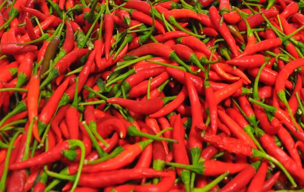 Ajies Picantes Cortos Rojo